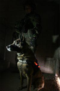 Leuchtende Markierung eines Hundes für den taktischen Einsatz