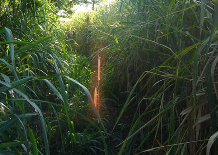 Metallstab - Stütze für Leuchtstab in dichter Vegetation
